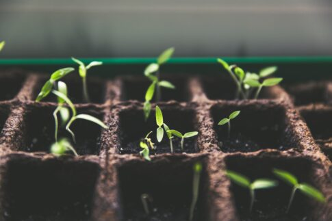 How to make a growth plan for a B2B company